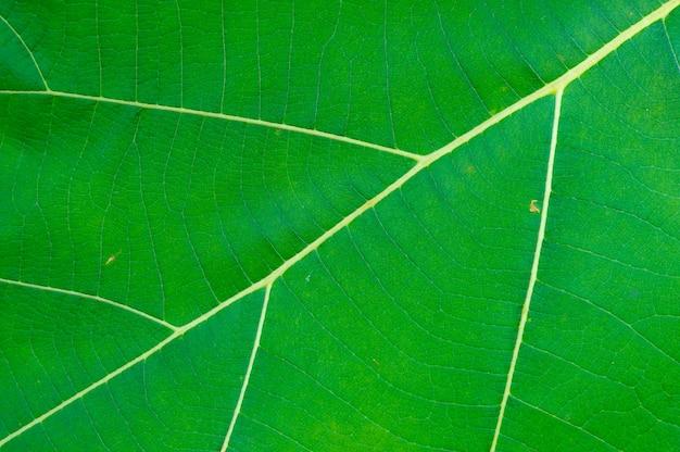 Albero verde di struttura della foglia della natura.