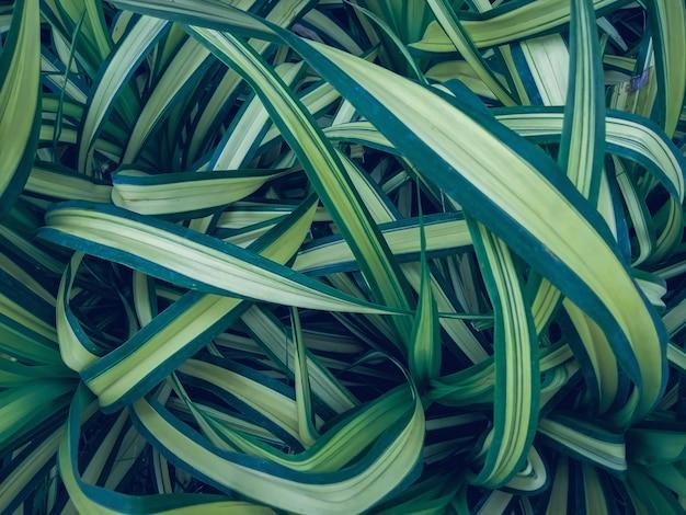 Congedo di natura per sfondo abstrack