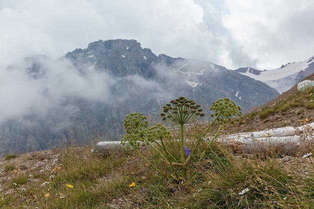 Natura in montagna. primo piano della pianta verde contro le grandi montagne del kazakistan, shymbulak.