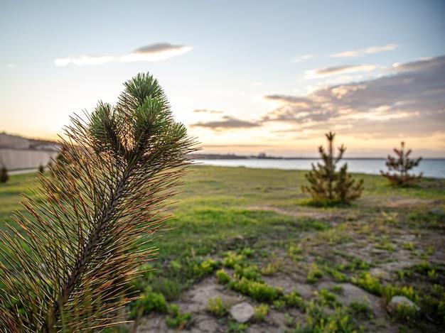 Natura e piante nella zona vicino al mare. concetto di fauna selvatica.