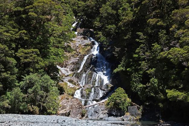 Natura dell'isola del sud della nuova zelanda