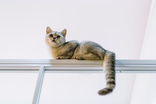Un gatto cattivo che si arrampica in alto