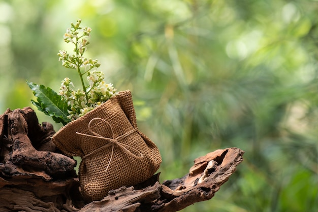Neem o azadirachta indica foglie verdi e fiori sulla natura.