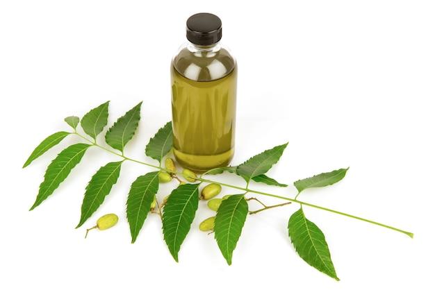 Neem o azadirachta indica foglie verdi, frutti e olio isolati su sfondo bianco.