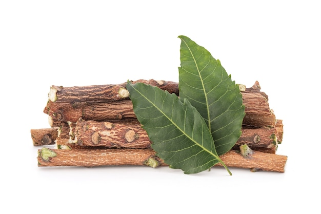 Neem o azadirachta indica, boschi e foglie verdi isolati.