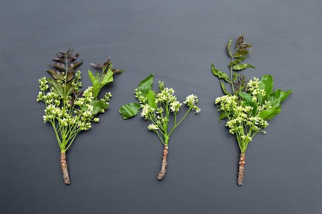 Foglie e fiori di neem su oscurità