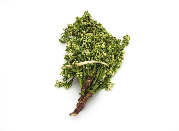 Verdure di neem isolate. sapore amaro e ha molte proprietà medicinali.