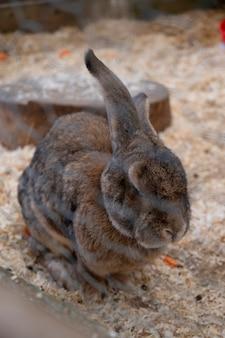 Nerino coniglietto nero alla fattoria, coniglio dalle lunghe orecchie in gabbia Foto Premium