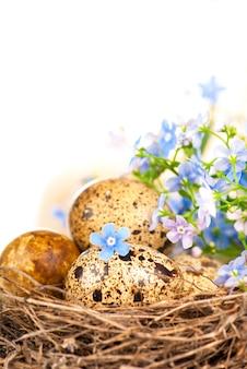 Nido con uova e nontiscordardime su bianco