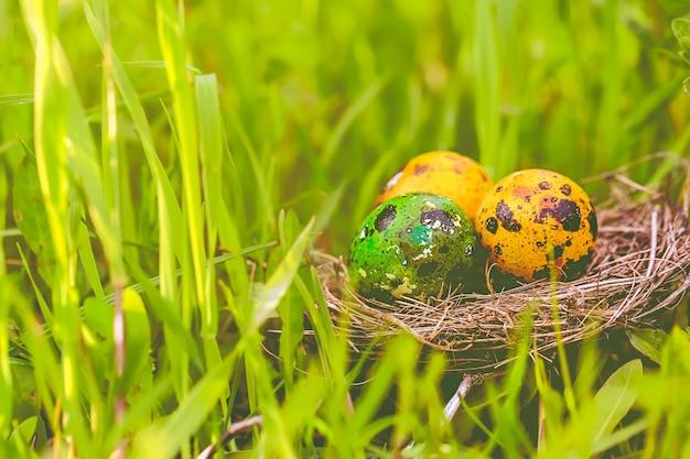 Nido con uova nell'erba primavera composizione pasquale