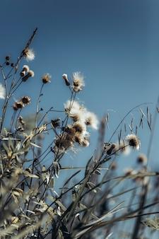 Sfondo neutro di fiori secchi