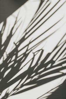 Composizione floreale neutra con silhouette di ramo di palma tropicale