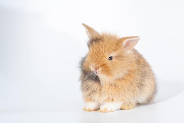 Coniglio appena nato o simpatico coniglietto