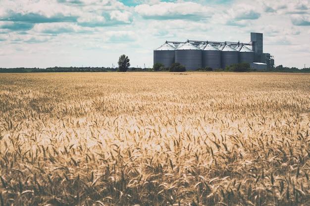 Nuovo elevatore del grano sullo sfondo di un campo di grano