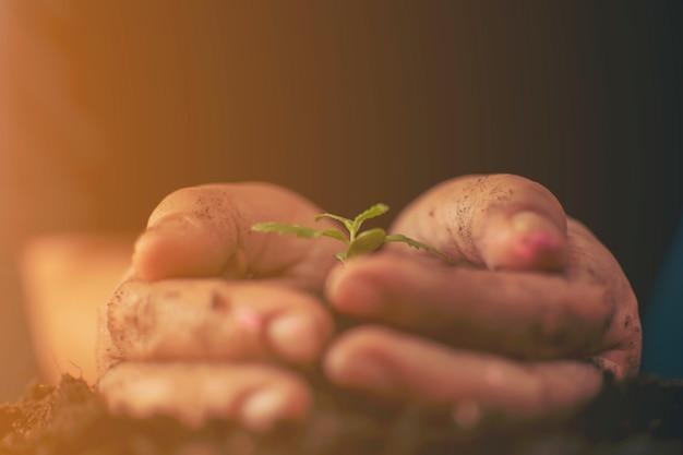 Nuovo concetto di vita con semina crescente germoglio (albero).