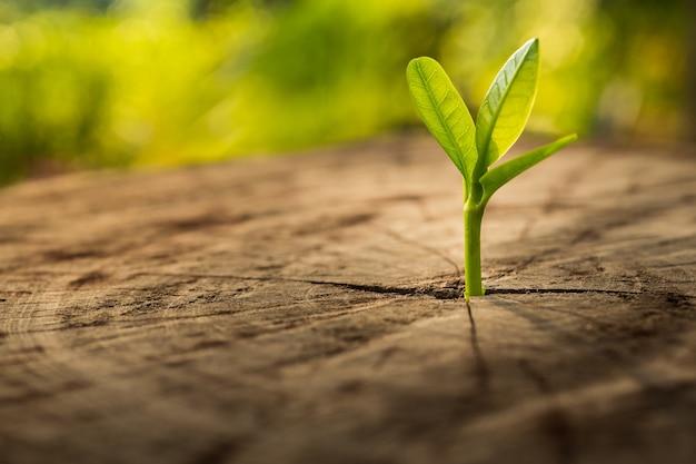 Nuovo concetto di vita con germogli in crescita della piantina