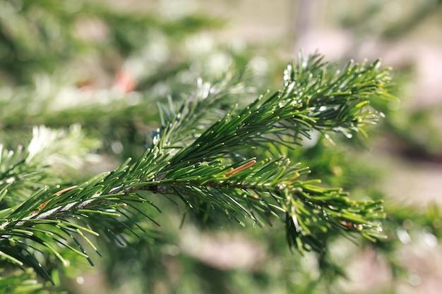 Nuova vita nel brunch primaverile dell'albero