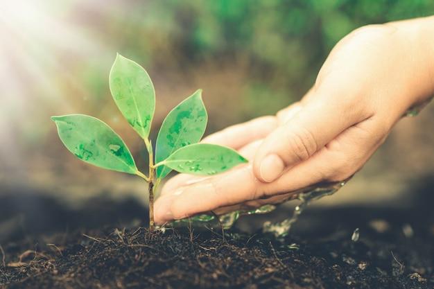 La nuova vita della piantina di una giovane pianta cresce nel suolo nero