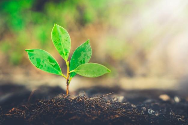 Nuova vita della piantina della plantula che cresce nel suolo nero