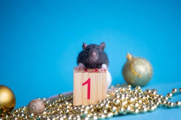 Carta di capodanno. simbolo del ratto di capodanno 2020 con decorazioni di natale bagattelle dorate su blu, gennaio, 1