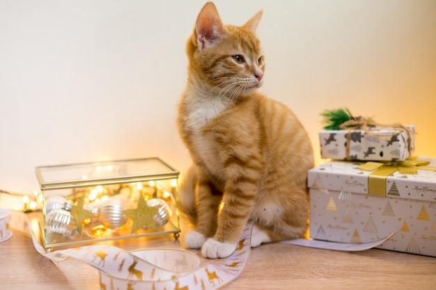 Capodanno, gatto di natale in fiocchi dorati e luci boken e ghirlanda. foto di alta qualità