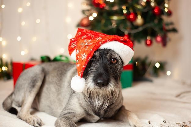 Anno nuovo concetto, natale. cane divertente con la barba in un cappello di babbo natale sullo sfondo di ghirlande e un albero di natale.