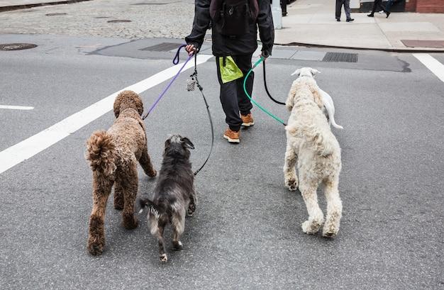 Dog walker di new york city. animali e loro proprietari per le strade della grande città. i cani per le strade di new york.