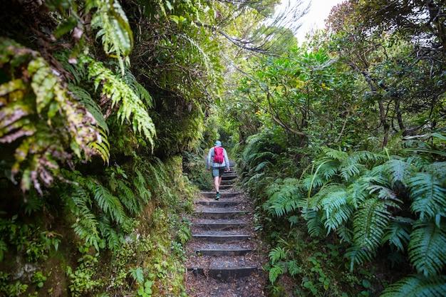 Foresta tropicale della giungla della nuova zelanda.