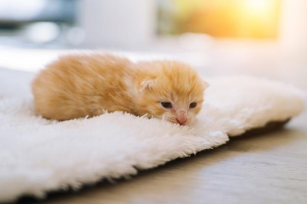 Gatto rosso neonato che dorme su una posa divertente gruppo di piccoli adorabili gattini allo zenzero che dormono animali domestici e piacevoli momenti di pisolino animali domestici confortevoli dormono a casa accogliente messa a fuoco selettiva