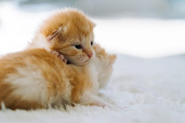 Gatto rosso neonato che dorme su un gruppo di posa divertente di un piccolo e carino gattino allo zenzero che dorme nell'animale domestico