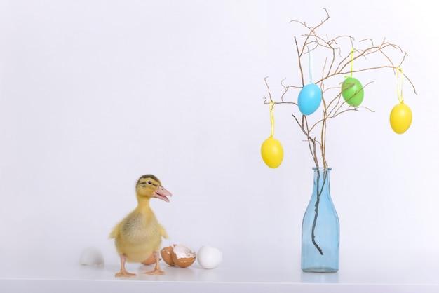 Anatroccolo e coperture neonati delle uova e decorazione di pasqua