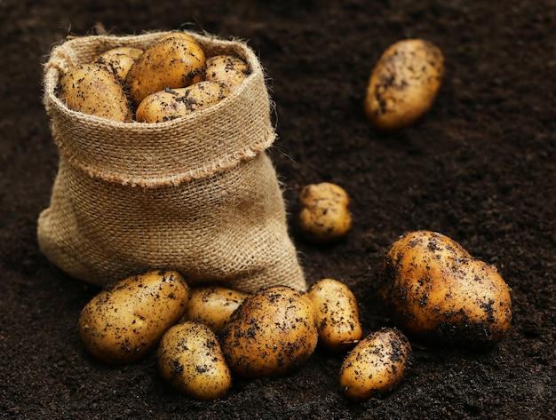 Patate appena raccolte in sacco e macinate