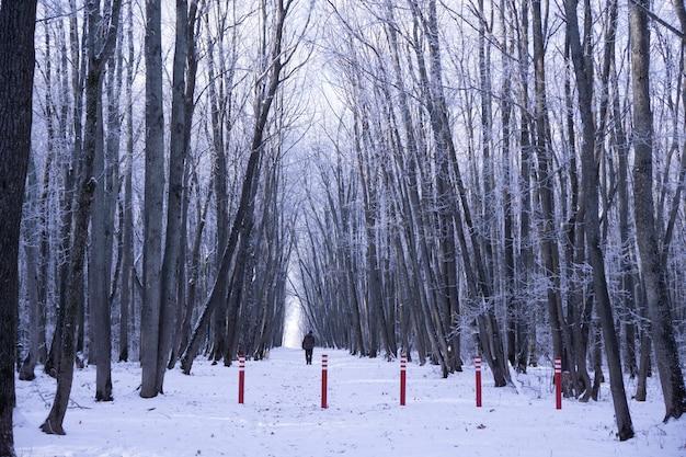 Appena neve sull'albero nella foresta e uomo sulla strada il giorno d'inverno