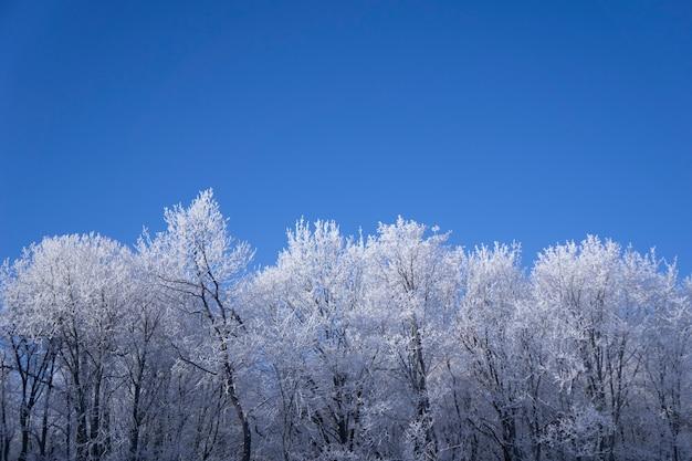 Appena neve sull'albero nella foresta in giornata invernale di luce solare