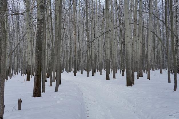 Appena neve sull'albero nella foresta il giorno d'inverno