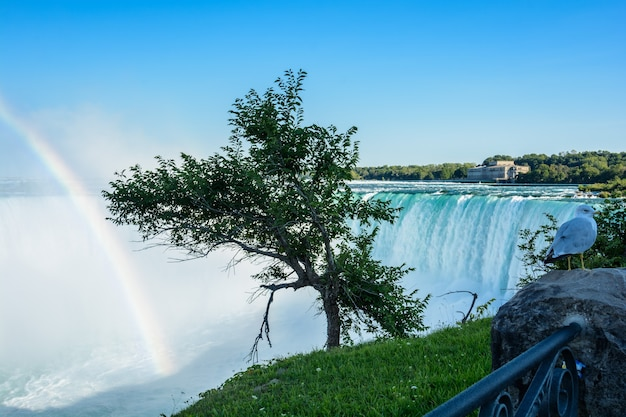 Cascate del niagara, arcobaleno a ferro di cavallo e gabbiano. bellissimo arcobaleno multicolore sullo sfondo di una cascata