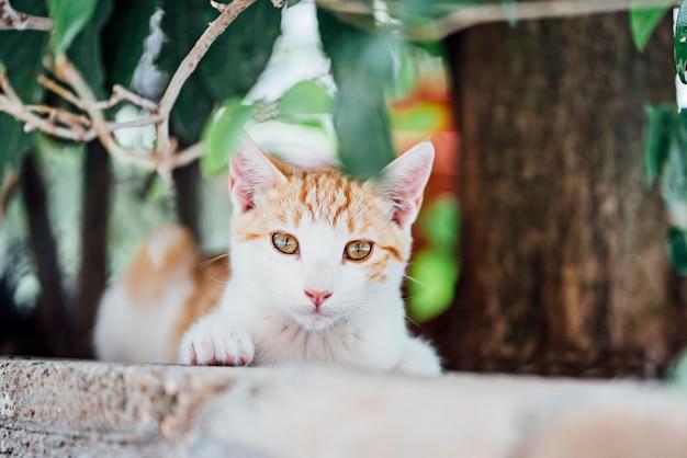 Bel gatto in giardino