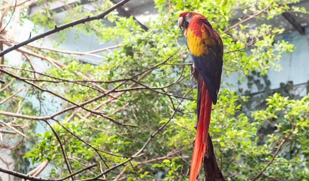 Bello macaw variopinto nella foresta verde