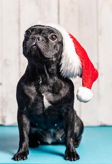Simpatico bulldog francese, nero, con cappello natalizio di babbo natale