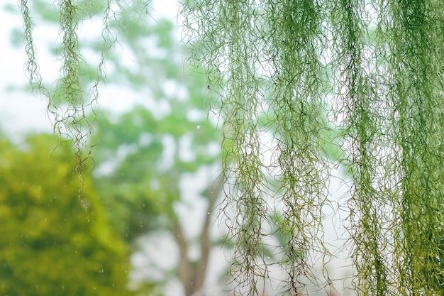 Bel giardino durante la stagione delle piogge