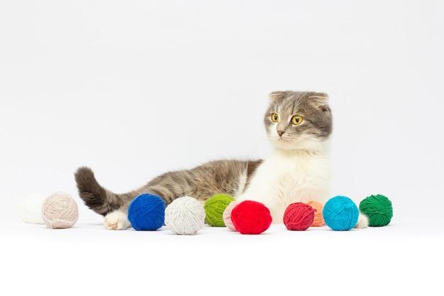 Simpatico gatto tabby scottish fold che gioca con palline di lana