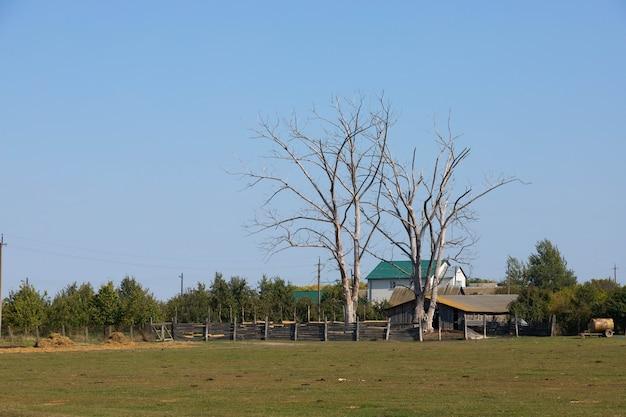 Bella vista sul ranch, una fattoria con alberi secchi.