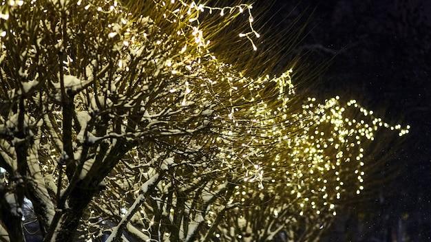 Illuminazione di vacanze di natale di notte sugli alberi all'aperto