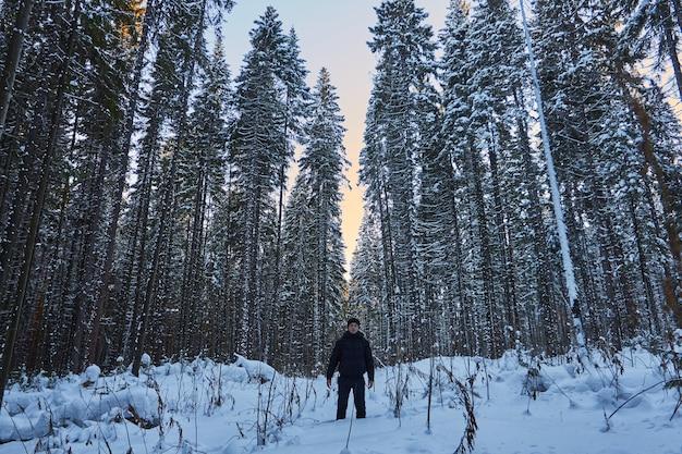 Notte in una selva oscura, una passeggiata nel bosco.
