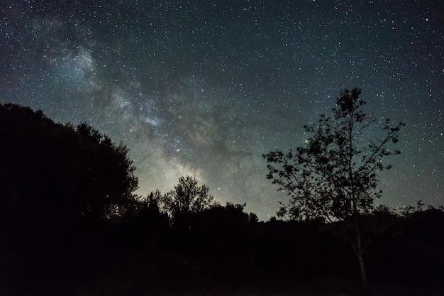 Cielo notturno con la via lattea sopra la foresta in spagna