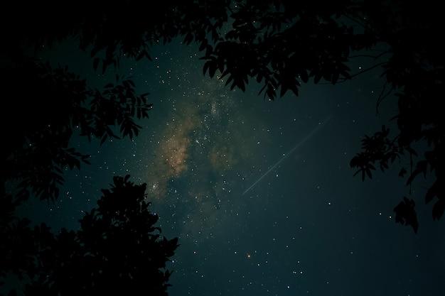 Cielo notturno con via lattea e alberi