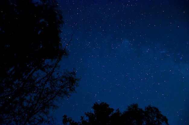 Cielo notturno con stella.