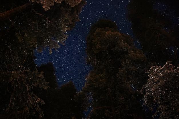 Vista notturna delle cime degli alberi al parco nazionale di yosemite, stati uniti