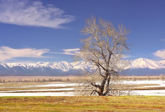 La catena del nordchui nei monti altai un albero spoglio nella steppa kurai