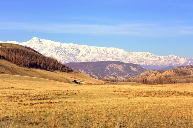La gamma northchui nei monti altai kurai steppa in primavera montagne innevate